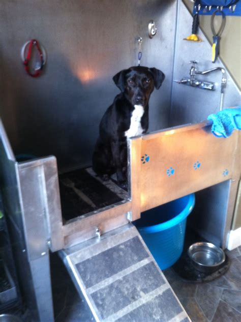 dog washing stainless 1000 images about pet products on pinterest dog dishes