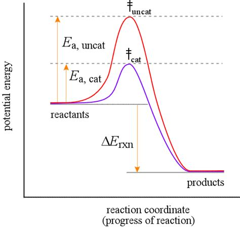 tutorial questions on rate of reaction chemistry wiki kineticequilibrium