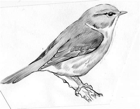 dibujos realistas a lapiz faciles nor martin ilustracion dibujos a lapiz sobre curruca
