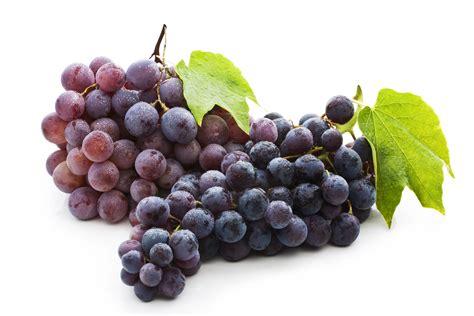 imagenes hd uvas os benef 237 cios da uva