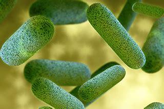 bacterium    fever linked   hodgkin