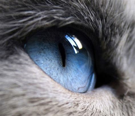 cats color blind ultimate cat the eye of a cat are cats colorblind