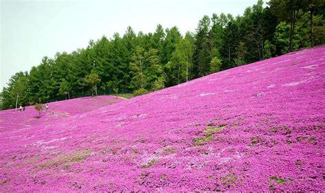 Pink Garden pink garden in hokkaido japan