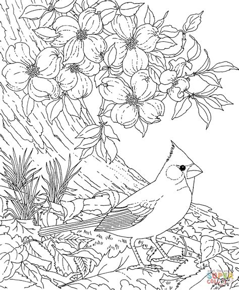 coloring page of dogwood flowers red cardinal and dogwood blossom north carolina bird and