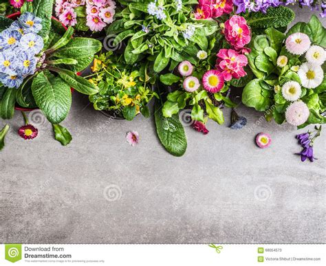 Garden Decoration Concept by Various Summer Garden Flowers In Pots On Gray