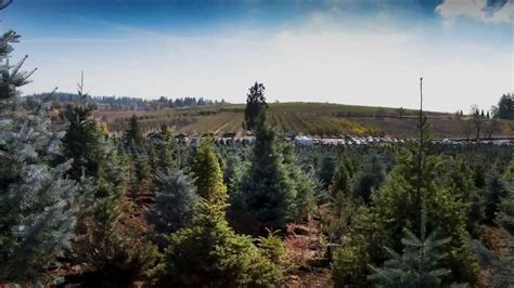 hillside tree farm apple hill ca youtube