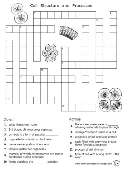 printable crossword puzzles middle school printable puzzles for middle school science middle