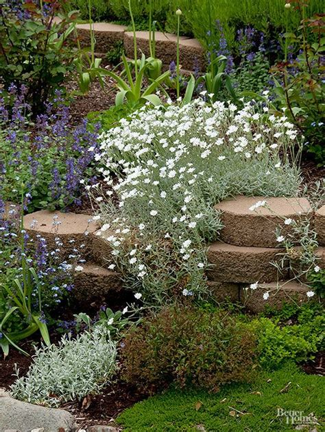 Best Plants For Rock Gardens Best Plants For Rock Gardens Plants Rocks And In Summer