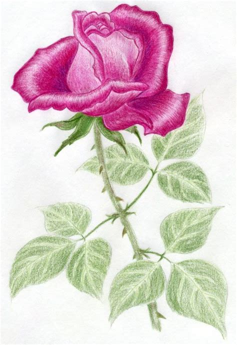 drawings with color flower drawings with color www pixshark