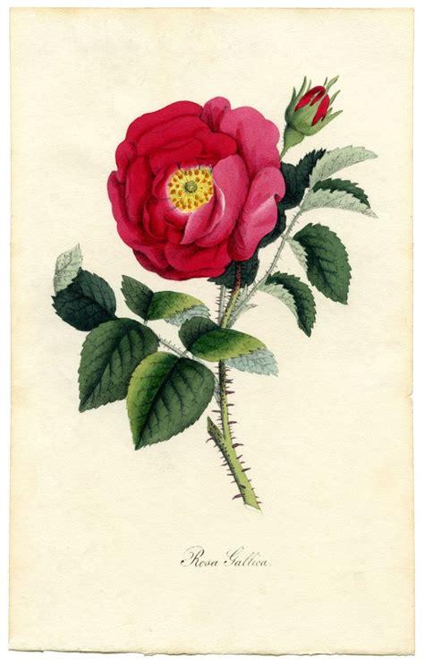 printable vintage flowers remodelaholic 25 free printable vintage floral images