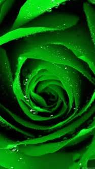 1080x1920 Green Rose Flower Wallpapers HD
