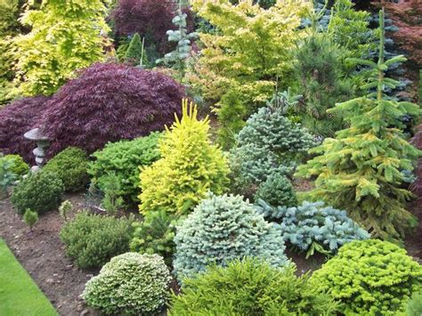 best evergreen garden ideas on pinterest