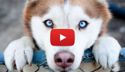 when can puppies see what can our dogs see the truths and the myths viral fancy