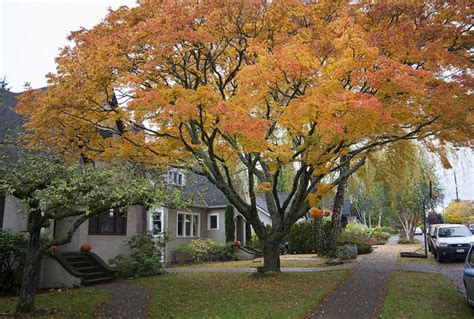 medium sized trees for front yard epic front yard tree flickr photo