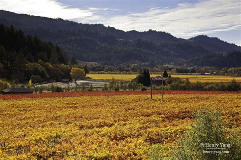 fall colors 2015 napa valley fall color 2015 california