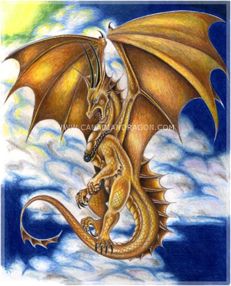 www dragon dragon drawings in color www pixshark com images