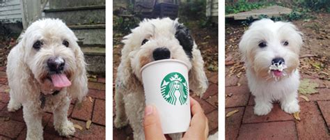is a puppuccino for your puppuccino day
