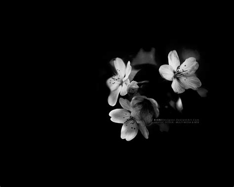 black and white flower background black and white flowers wallpaper 16 wide wallpaper