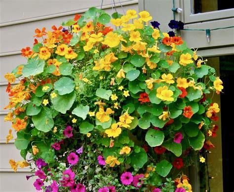 fiori da piantare in primavera 6 fiori bellissimi da piantare in primavera