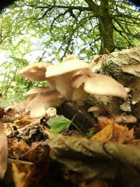 habitat jamur   hidup jamur budisma