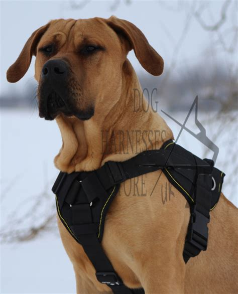large harness big leash breeds picture