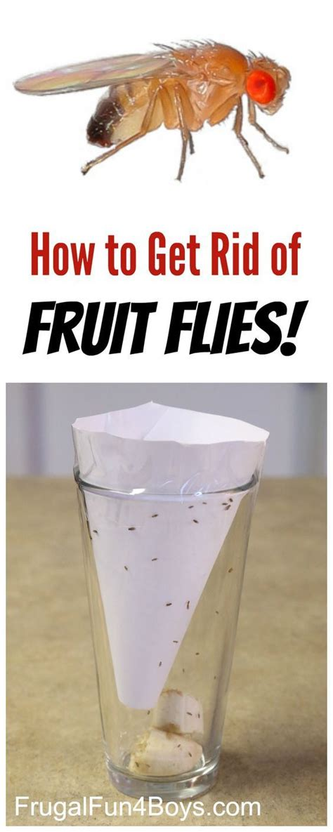 how to get rid of flies in the backyard 17 best ideas about fruit flies on pinterest how to get