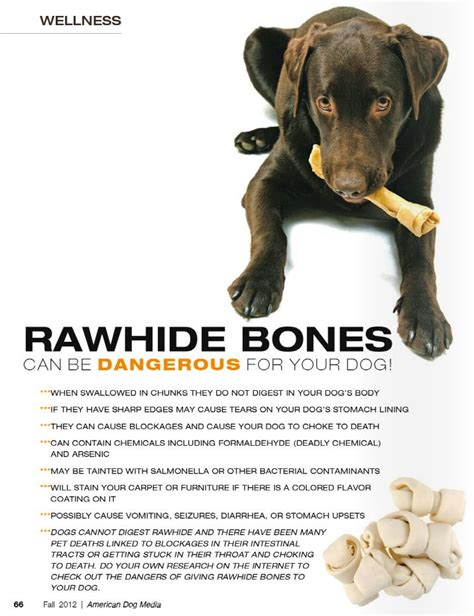 can puppies eat rawhide 25 best ideas about rawhide bones on poisons information canned food