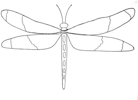 Dragonfly Outline Template by 39 Best Images About Dragonflies On Dragonfly Design Domain And