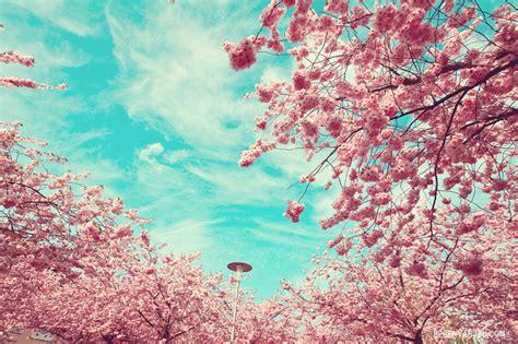 wallpaper bunga persik coba perhatikan watashi no nikki