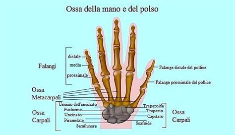 dolore braccio sinistro interno dolore al polso destro o sinistro esterno tendinite