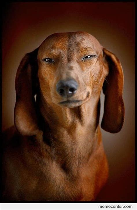Dog Face Meme - this dog got a cunning face by ben meme center