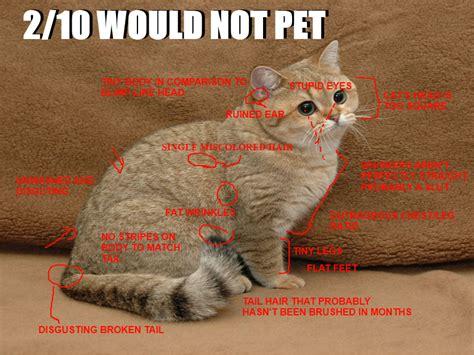 Pet Meme - image 239431 2 10 would not bang know your meme