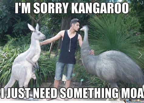 Kangaroo Meme - 27 more funny kangaroo pictures