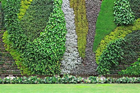 Vertical Garden History The Best Plants For Walls Plants For Garden Walls