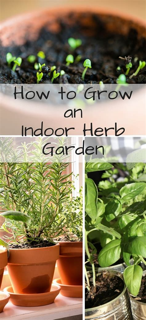 how to grow herbs how to grow an indoor herb garden