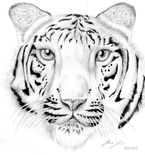 coloring page bengal tiger tiger coloring pages bengal tiger coloring pages kids