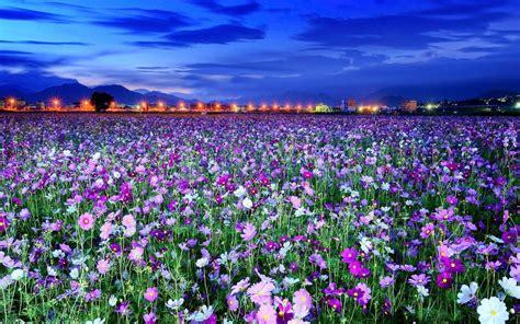 spring florals spring flowers flowers wallpaper 31493902 fanpop