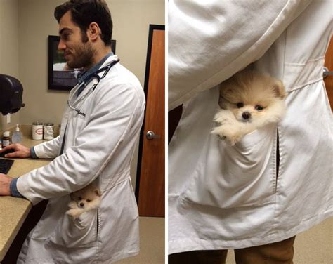 the animal doctor that ll make you want to get your pet checked bored panda