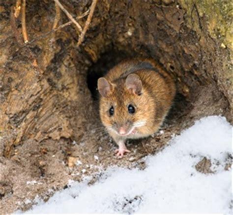 tierschutz winter tiere futter unterschlupf