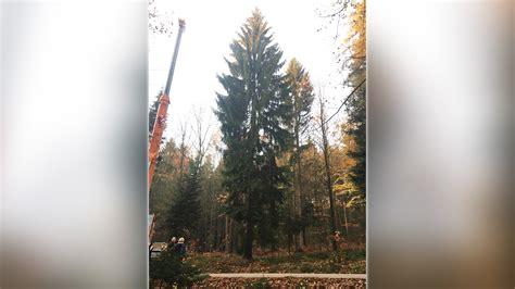 best 28 wann stellt den weihnachtsbaum auf lebe