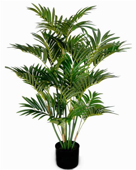 palme wohnzimmer wohnzimmer pflanzen palme goetics gt inspiration