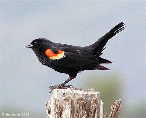 telling secrets blackbird fly