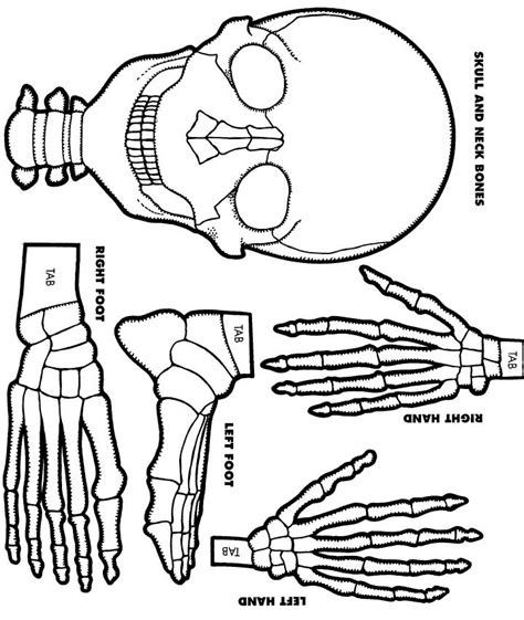 skeleton template to cut out best photos of printable skeleton cut out