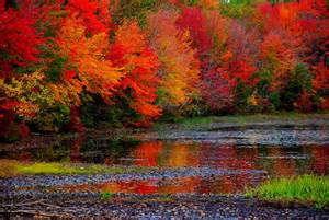 Fall Autumn Fall Foliage Planning Guide Road Trips With Tom