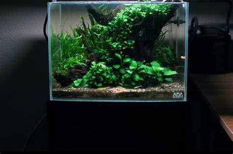 fish tank plant light image gallery low tech planted tank