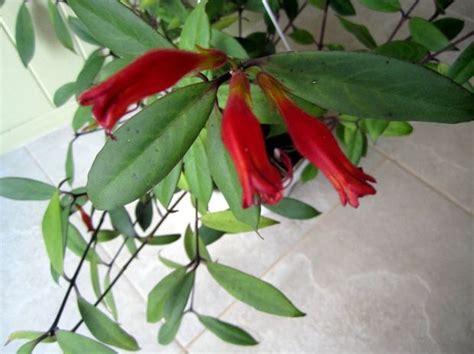 beauty  lipstick plant silivecom
