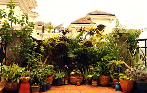 balcony garden design decor disha an indian design decor my