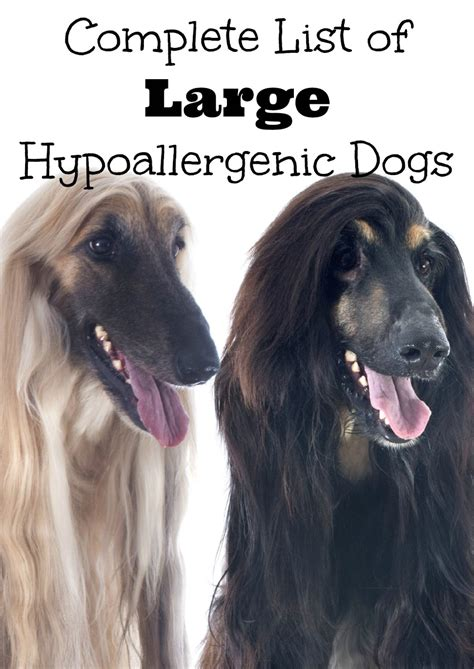 hypoallergenic big dogs complete list of large hypoallergenic dogs dogvills