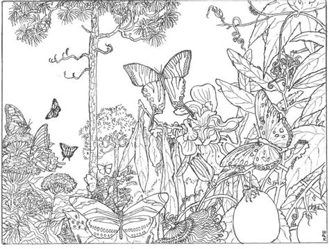rainforest butterfly coloring pages hard forest scene coloring pages the longleaf forest is