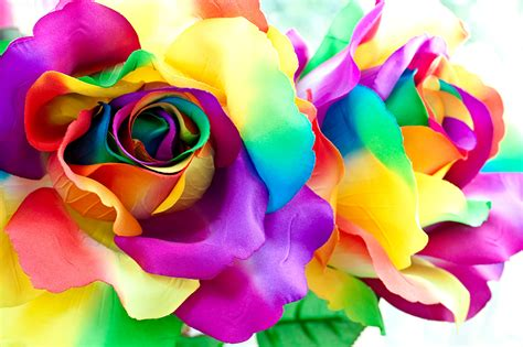 imagenes de rosas multicolores 壁紙 バラ クローズアップ 花びら カラフルな 花 ダウンロード 写真